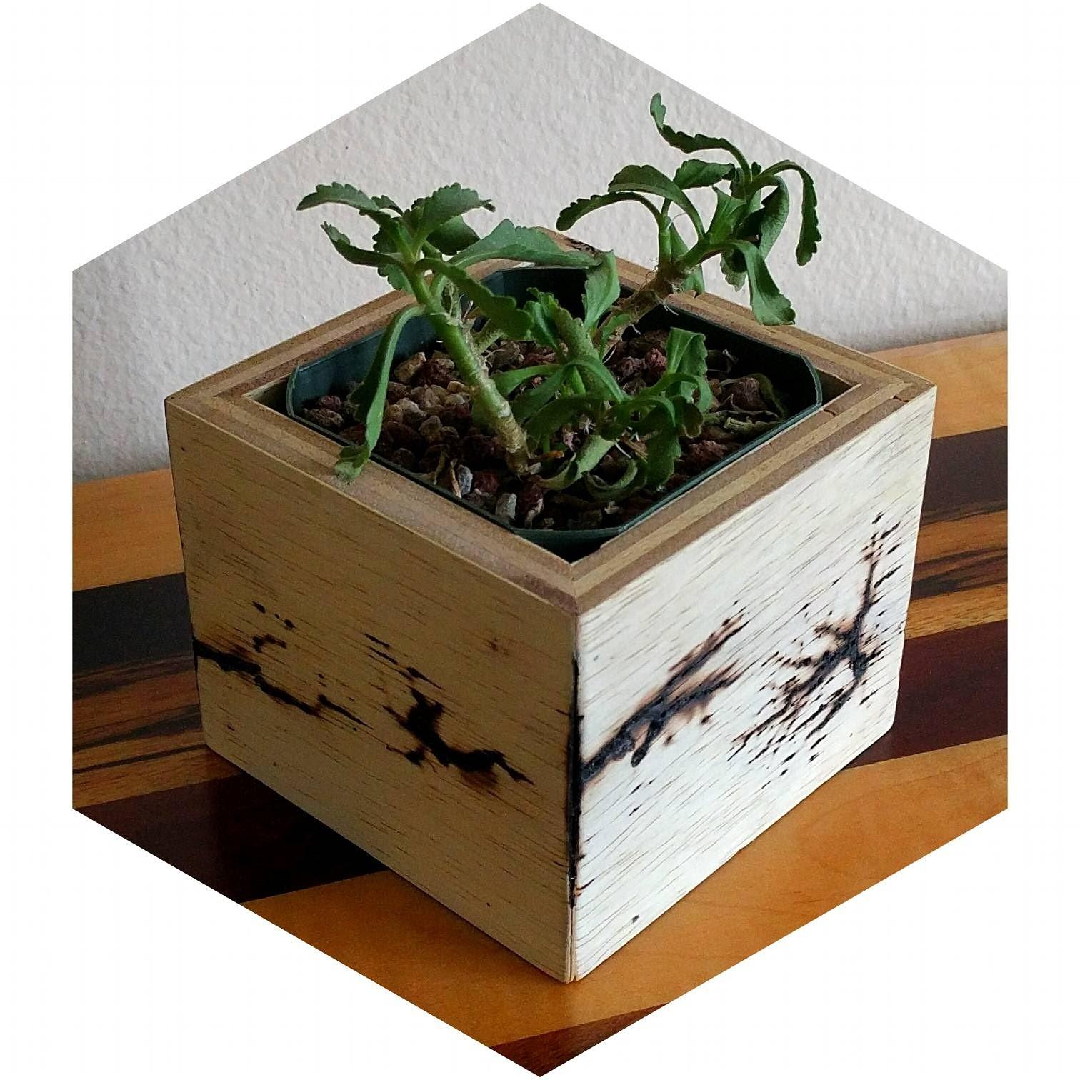 James Davis Designs succulent planter box with lichtenberg fractals aka electrical erosion