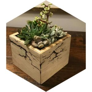 Electrified wood planter box for succulent